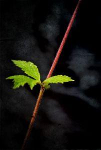 green-leafs-1427729-m