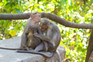 monkey-family-love-1426002-m