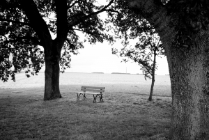 bench-and-trees-2-1245963-m